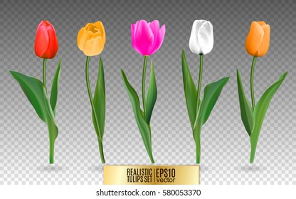 Realistic vector colorful tulips set. Not trace. The blank for your design. Red tulips flowers on transparent background.
