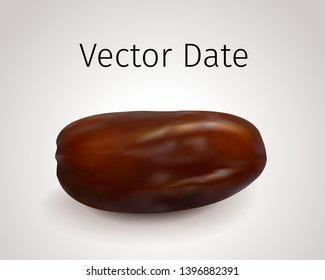 Realistic Vector Dates Fruit isolated on white background. Natural Oriental Sweet Dried Fruit