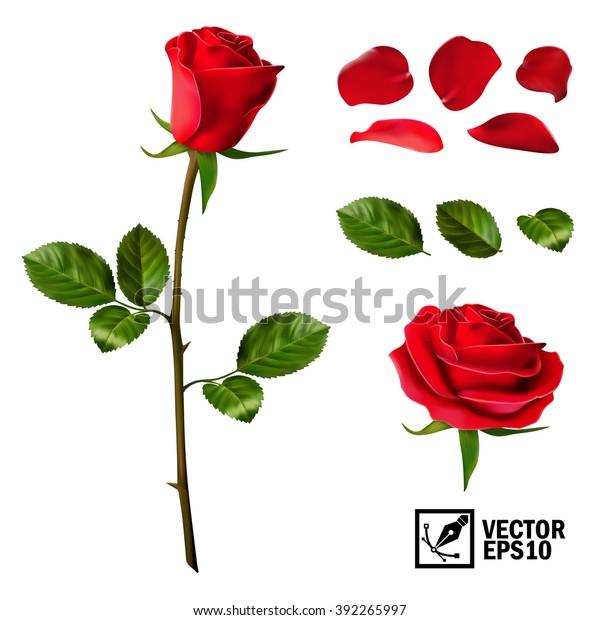 Реалистичный векторный набор элементов красных роз (лепестки, листья, бутон и открытый цветок) с возможностью изменения внешнего вида цветка, как в конструкторе