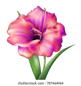 Realistic vector flower. Beautiful pink and red lily. Isolated vector illustration on white background.