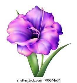 Realistic vector flower. Beautiful pink purple lily. Isolated vector illustration on white background.