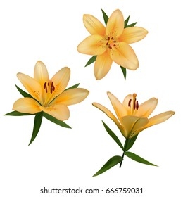 Realistic vector flowers set. Bouquet of orange lilies. Isolated vector illustration on white background.