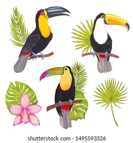 Realistic vector hand drawn illustration tropical set of toucan birds with flower and leaves. Colorful tropic birds isolated on white with watercolor effect