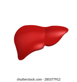 realistic vector human liver, Isolated on white background