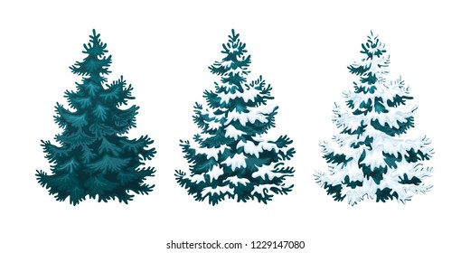 Realistic vector illustration of fir tree in snow on white background. Blue fluffy pine, isolated on white background 2.2