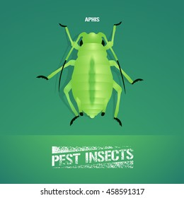 Realistic vector illustration of insect  Aphidoidea (aphis). Pest insect of agriculture farmland. Design element for insecticide poster, brochure, article