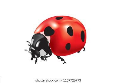 Realistic vector illustration of Ladybird