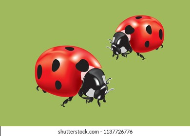 Realistic vector illustration of Ladybird