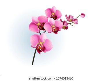 Realistic vector illustration of pink orchid branch. Phalaenopsis, blossom, houseplant. Flowers concept. For topics like beauty, botany, spring