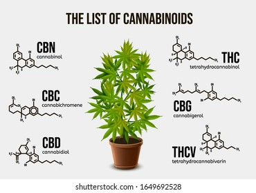 Realistic vector illustration of potted cannabis and chemical structure of cannabinoid compounds. Image depicting types of psychoactive ingredients in cannabis plant. The list of cannabinoids.