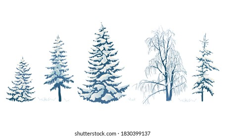 Realistic vector illustration of a spruce tree in the snow on a white background. Green fluffy pine isolated on a white background. Winter snow-covered trees. Elements for the Christmas scene.