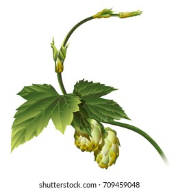 Realistic vector image of a plant hop
