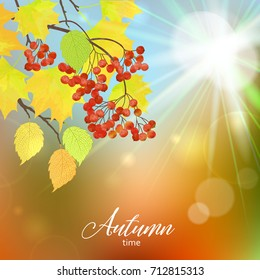 Realistic vector silhouette autumn tree for your design on the blurred background. Vintage hand drawn illustration with space for text