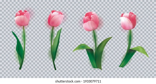 Realistic vector tulips set. Beautiful tulip buds, spring flowers design for greeting card 8 march or mothers day, floral elements realistic vector set.