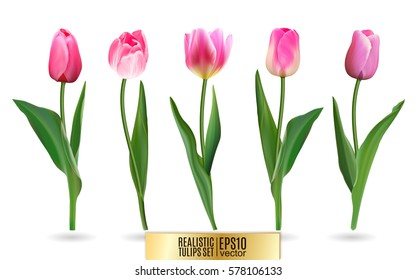 Realistic vector tulips set. Not trace. The blank for your design. Pink tulips flowers on white background.