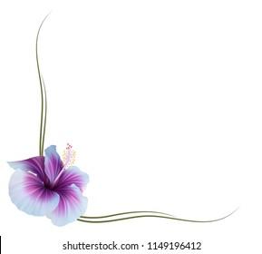 Realistic violet hibiscus frame, corner.