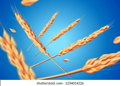Realistic wheat oats elements. Flying detailed barley isolated on blue background for Healthy food or agriculture design. Vector 3d illustration.