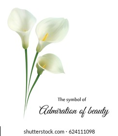 "Realistic white calla lily. ""Admire your beauty""."