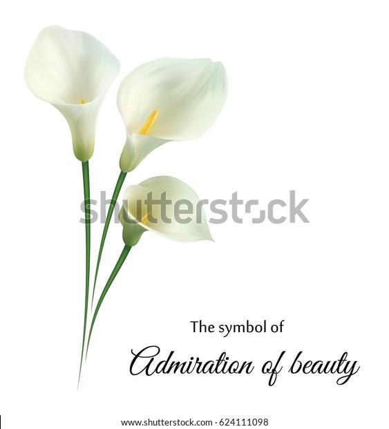 Реалистичная белая калла-лилия. «Полюбуйтесь своей красотой».