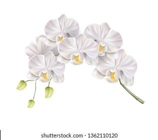 Realistic white orchid flower branch with buds on stem. Elegant wedding invitation, spa salon decoration design. Vector marriage invitation card, romantic event element. Spring, summer holiday florals