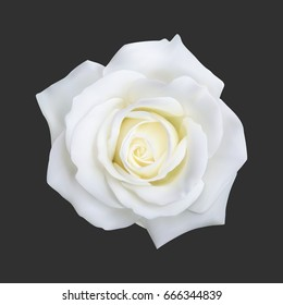White rose images stock photos vectors shutterstock realistic white rose vector illustration on black background mightylinksfo