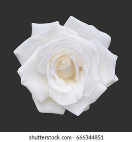Realistic white rose, vector illustration on black background