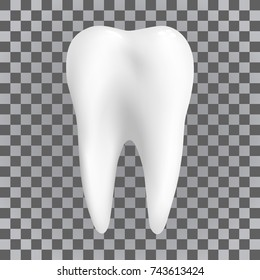 Realistic white tooth. Dental poster transparent, tooth Icon. Vector illustration