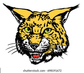 Realistic Wildcat or Bobcat mascot head, growling, reminiscent of traditional school mascots but with a new look and attitude. Suitable for all sports.
