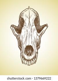 Realistic wolf skull in a graphic technique