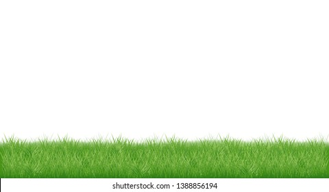realistic young juicy green grass. isolated on white background