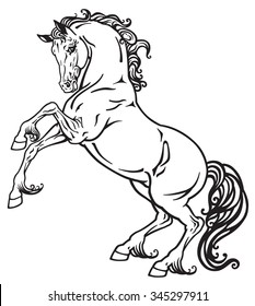 rearing horse black and white outline image