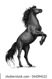 Rearing horse isolated sketch. Black stallion horse of arabian breed stands up on hind legs. Equestrian sporting competition symbol, horse racing badge, t-shirt print design