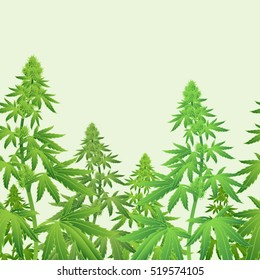 Recreational Marijuana Plant Cannabis horizontal seamless pattern vector illustration