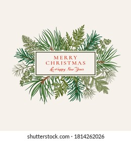 Сhristmas rectangular banner with fir and pine branches, fern and leaves. Botanical illustration. Vector holiday card. Greenery.