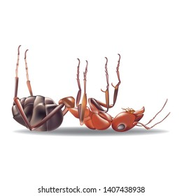 Red ant dead isolated white background