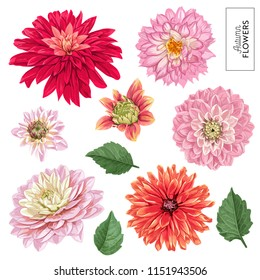 Red Asters Flowers Set. Tropical Floral Elements for Decoration, Pattern, Invitation, Wallpaper. Tropic Botanical Flowers Background. Vector illustration