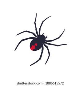 Red back spider on white, vector