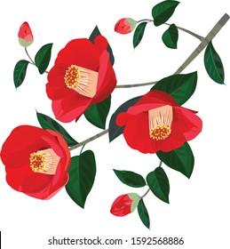 Red beautiful camellia in winter