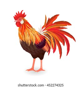 red beautiful rooster for your design