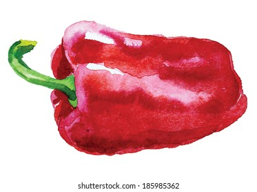 Red bell pepper. Hand drawn watercolor painting on white background, vector illustration.