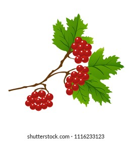 Red berries and green leaves on tree branches. Vector illustration of viburnum berries set.