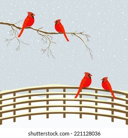 Red birds on branch and fence in winter