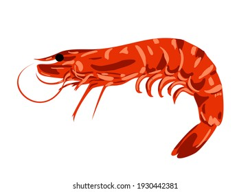 Red boiled shrimp or tiger prawns isolated on a white background as a package design element. Image for a menu of fish restaurants, for packaging in markets and in stores. Vector illustration.