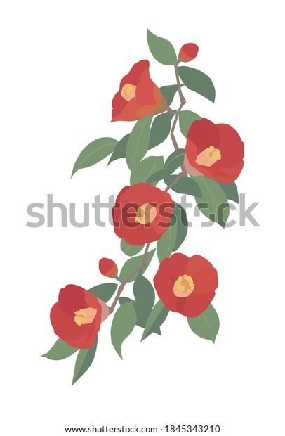 赤い椿の花、ベクターイラスト