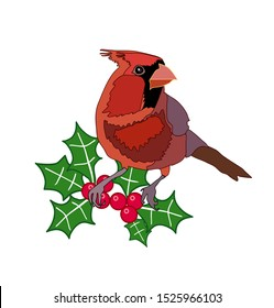 Red cardinal bird on holly berries winter illustration Christmas vector art