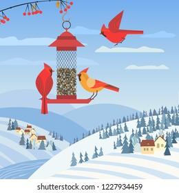 Red cardinal birds on feeder. Birdfeeding near winter rural community. Small bird of backyard minimal cartoon design. Bbirds feeding by sunflower seeds. Birdwatching background. Vector illustration