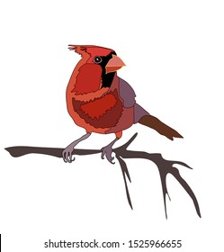 Red cardinal on branch winter bird illustration Christmas vector isolated