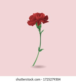 Red carnation with pink background, image vector