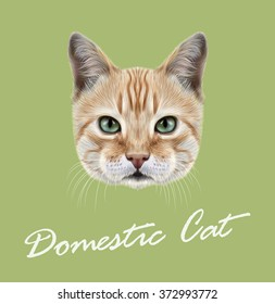 Red Cat. Vector Illustrated Portrait of Domestic Cat on green background.