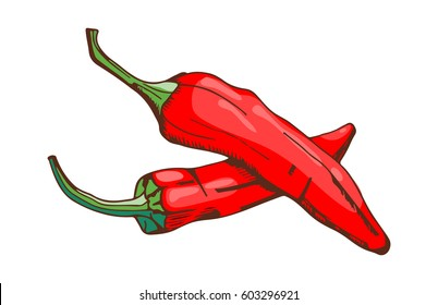 Red chilli pepper food seasoning hand drawn style vegetable ingredient paprika spicy and fresh vegetarian color organic ingredient vector illustration.